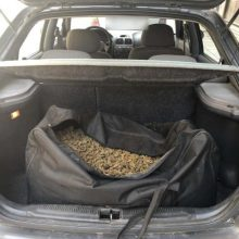 Συνελήφθη 68χρονος, σε περιοχή της Καστοριάς, για διακίνηση 12 κιλών και 200 γραμμαρίων ακατέργαστης κάνναβης (Φωτογραφίες)