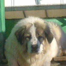 Κηπάρι Κοζάνης: Κλοπή Σκύλου