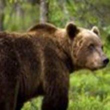 """kozan.gr: Επιδρομή αρκούδας σε κοτέτσι ιδιώτη στη Βλάστη Εορδαίας – """"Γκρέμισε"""" το κοτέτσι και κατασπάραξε 10 κότες & 2 πάπιες (Φωτογραφίες)"""