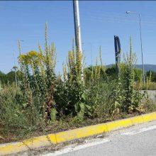Εορδαία: Τα χόρτα σκεπάζουν τα αυτοκίνητα