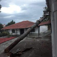 kozan.gr: Δέντρο, λόγω των δυνατών ανέμων, έπεσε πάνω στη σκεπή του Ιερού Ναού Αγίας Μαρίνης Τσοτυλίου (Φωτογραφίες(