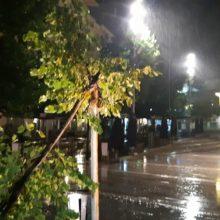 kozan.gr: H κακοκαιρία κατέστρεψε και δέντρο στην κεντρική πλατεία της Κοζάνης (Φωτογραφίες)