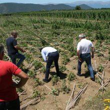 Ρήμαξε τις φυτείες με φασόλια Πρεσπών η πρόσφατη καταιγίδα, πλήγμα για παραγωγούς και τοπικές επιχειρήσεις