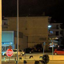 kozan.gr: Παράπονο αναγνώστη για αγέλη αδέσποτων σκυλιών που κυκλοφορεί στην περιοχή γύρω από τα ΚΤΕΛ Κοζάνης