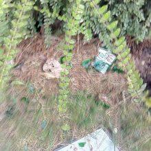 kozan.gr: Λίγη προσοχή, απ' όσους δε σέβονται το δημόσιο χώρο και πετούν αποτσίγαρα, χαρτιά και πλαστικά στο Δημοτικό κήπο Κοζάνης, ζητεί αναγνώστρια (Φωτογραφίες)