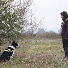 Νέο κρούσμα δηλητηρίασης ποιμενικών σκύλων στη Φλώρινα – Αντιδράσεις από περιβαλλοντικές οργανώσεις
