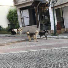 Σχόλιο αναγνώστη στο kozan.gr: Τι γίνεται, επιτέλους, με τα αδέσποτα, στην Αιανή;