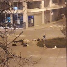 Σχόλιο αναγνώστη στο kozan.gr: Κάθε βράδυ η ίδια κατάσταση στην οδό 11ης Οκτωβρίου στην Κοζάνη