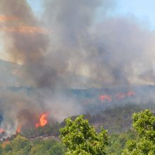 Σε απόλυτο έλεγχο η πυρκαγιά στο Λογγά Ελάτης – Παραμένουν τη νύχτα οι δυνάμεις της πυροσβεστικής για τον κίνδυνο αναζωπύρωσης της φωτιάς