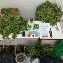 Συνελήφθη από αστυνομικούς του Τμήματος Ασφάλειας Γρεβενών 35χρονος για καλλιέργεια και κατοχή ναρκωτικών, καθώς και για παράβαση του νόμου περί όπλων, σε περιοχή της Θεσσαλονίκης (Φωτογραφία)