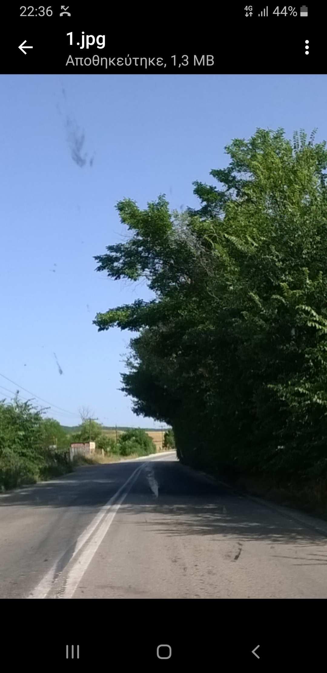 Σχόλιο αναγνώστη του kozan.gr προς τη Δημοτική Αρχή του Δήμου Εορδαίας: «Καθαρισμός κλαδιών στο δρόμο από Περδίκκα προς Αμύνταιο» (Φωτογραφία)