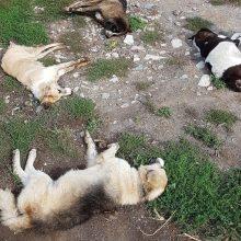 Απίστευτης έκτασης μαζική δηλητηρίαση σκύλων στο Σκλήθρο, τον Αετό και το Νυμφαίο Φλώρινας – Συνολικά 26 σκυλιά, τα περισσότερα κτηνοτρόφων, βρήκαν φρικτό θάνατο