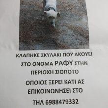 Κλάπηκε σκυλάκι, από την περιοχή Σιόποτο Κοζάνης, που ακούει στ' όνομα Ράφυ