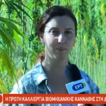 Η πρώτη καλλιέργεια βιομηχανικής κάνναβης στη Δυτική Μακεδονία (Bίντεο)