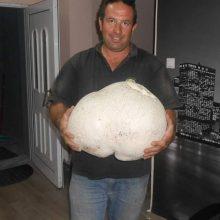 kozan.gr: Το μανιτάρι γίγας, βάρους 11 κιλών, που βρέθηκε σε ορεινή περιοχή του Δήμου Γρεβενών