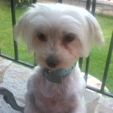 Κοζάνη: Χάθηκε σκυλάκι στην περιοχή του γηροκομείου