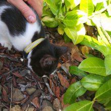 Κοζάνη: Βρέθηκε γατάκι στην περιοχή της ΖΕΠ