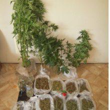 Σύλληψη 47χρονου , σε περιοχή των Γρεβενών, για καλλιέργεια δενδρυλλίων κάνναβης και κατοχή ναρκωτικών ουσιών – Κατασχέθηκαν 10 δενδρύλλια κάνναβης, 636,9 γραμμάρια ακατέργαστης κάνναβης και 10 σπόροι κάνναβης