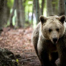 ΑΡΚΤΟΥΡΟΣ: Γνωρίστε τις αρκούδες του περιβαλλοντικού κέντρου
