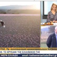 Η χθεσινή ζωντανή σύνδεση της εκπομπής «Κάθε Μέρα Ελλάδα» της ΕΡΤ3 με τα κροκοχώραφα της Κοζάνης (Βίντεο)