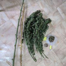 Σύλληψη 64χρονου ημεδαπού, σε περιοχή των Γρεβενών, για καλλιέργεια δενδρυλλίων κάνναβης και κατοχή ναρκωτικών ουσιών (Φωτογραφία)