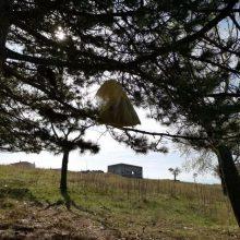 Σιάτιστα: Κρέμασαν σε δέντρο νεογέννητα κουταβάκια σε σακούλα, έξω από το προσωρινό καταφύγιο των φιλόζωων – Δεν άντεξαν στο κρύο – Μήνυση κατά αγνώστων κατέθεσαν οι φιλόζωοι (Φωτογραφίες)