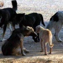 Σχόλιο αναγνώστη στο kozan.gr: Ο Δήμαρχος Εορδαίας ακούει;