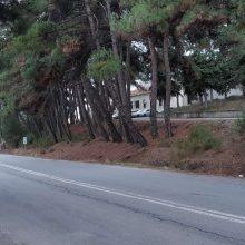 Kozan.gr: Επικίνδυνη κλίση σε κάποια δέντρα έξω απο τη Δ/νση Μεταφορών & Επικοινωνιών της Π.Ε. Κοζάνης, στην Λευκόβρυση (Φωτογραφίες)