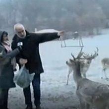 kozan.gr: Όμορφες σημερινές, κατάλευκες, εικόνες, μέσω της ζωντανής σύνδεσης της ΕΡΤ, από το πάρκο της Τ.Κ Αγ. Δημητρίου με τα περίπου 70 ελάφια (Βίντεο)