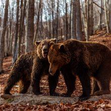 Οι αρκούδες ξύπνησαν στο Καταφύγιο στο Νυμφαίο
