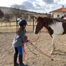 kozan.gr: Και στον Ιππικό Σύλλογο Κοζάνης, στα Πετρανά Κοζάνης, ανήμερα της Καθαράς Δευτέρας, γονείς, μαζί με τα παιδιά τους, έκαναν βόλτα με τα άλογα και πέταξαν χαρταετό, τιμώντας το έθιμο (Φωτογραφίες)