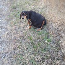 Επιστολή αναγνώστη, στο kozan.gr, για αβοήθητο σκυλάκι