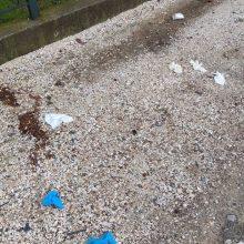 kozan.gr: Κοζάνη: Η κακή κι επικίνδυνη συνήθεια ορισμένων ασυνείδητων που πετούν μάσκες και γάντια όπου βρουν, δυστυχώς, συνεχίζεται (Φωτογραφία)