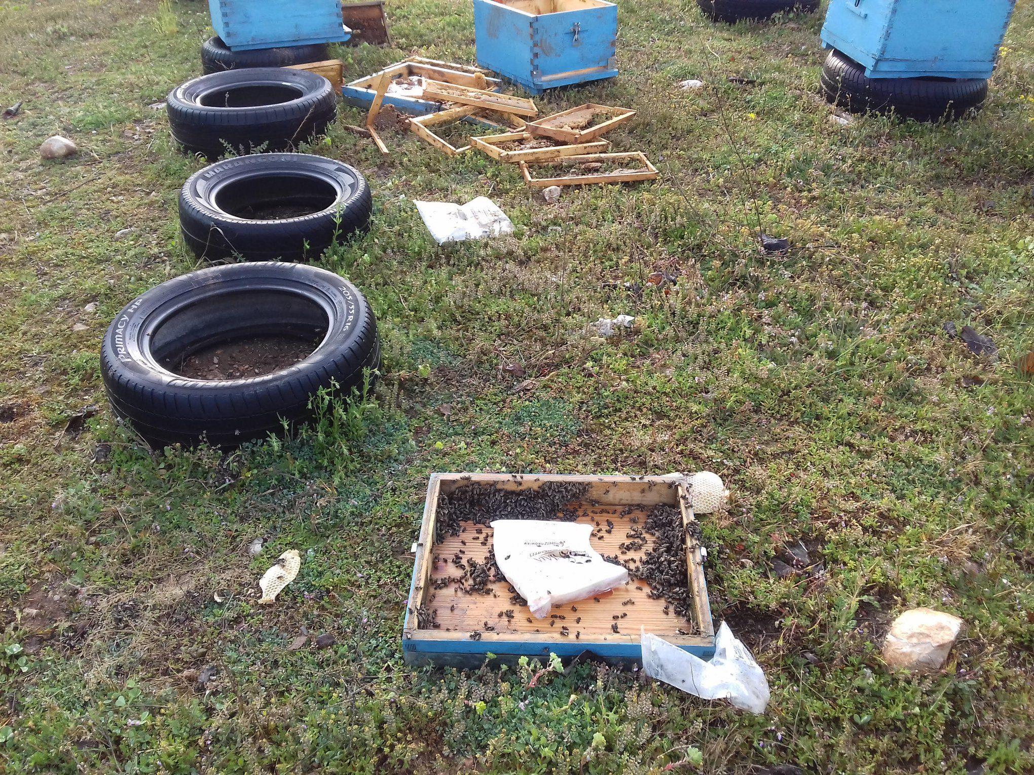 Μελισσοκομικός Σύλλογος Κοζάνης: 3 κρούσματα επίθεσης αρκούδας στην περιοχή του Βερμίου, 2 στα Κομνηνά και 1 στον Άγιο Χριστόφορο
