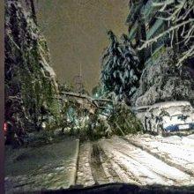 kozan.gr: Πτολεμαΐδα: Πτώση δέντρου επί της οδού Παλαιών Πατρών Γερμανού – Πτώσεις δέντρων, λόγω κακοκαιρίας, σε Άρδασσα, Καρυοχώρι κι Εμπόριο – Άμεση η επέμβαση της Πυροσβεστικής Υπηρεσίας Πτολεμαΐδας για τη διάνοιξη των δρόμων (Φωτογραφία)