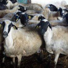Η Περιφέρεια Δυτικής Μακεδονίας προσκαλεί τους κτηνοτρόφους της ΠΕ Καστοριάς στην ενημερωτική ημερίδα για την παρουσίαση του έργου Complete και για τον καταρροϊκό πυρετό