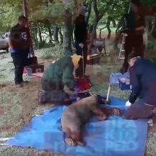Bίντεο με τα 2 αρκουδάκια  Bradley και ο Cooper! Επανένταξη των δύο ορφανών αρκούδων από τον «Αρκτούρο», που τα παρέλαβε υποσιτισμένα πριν από περίπου 12 μήνες από μία στάνη, στην Οινόη Κοζάνης