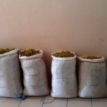 Σύλληψη τριών αλλοδαπών, σε περιοχή του ορεινού όγκου της Καστοριάς, για παράνομη συλλογή 94 κιλών αρωματικού-θεραπευτικού φυτού (Φωτογραφία)