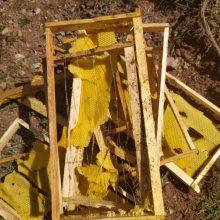 kozan.gr: Δύο επιθέσεις, σε μελίσσια, που παραπέμπουν σε αρκούδα, το τελευταίο 48ωρο, σε περιοχή κάτω από το Σμάθκο Κοζάνης – Αναφορές ότι πρόκειται για αρκούδα με το μωρό της – Τι αναφέρει, στο kozan.gr, ο συμπολίτης μας, ιδιοκτήτης, των μελισσίων, που υπέστησαν ζημιά (Ηχητικό – φωτογραφίες)