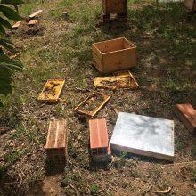 Επιδρομή, από αρκούδες, σε εγκαταστάσεις δύο μελισσοκόμων και στο Δροσερό Εορδαίας (Φωτογραφίες)