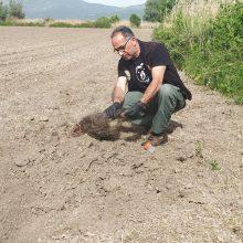 Καστοριά: Αρκούδα έθαψε τα δύο μικρά της, που τραυματίστηκαν θανάσιμα σε τροχαίο
