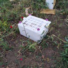 kozan.gr: Επίθεση αρκούδας σε μελίσσι στην Κερασιά Κοζάνης (Φωτογραφίες)