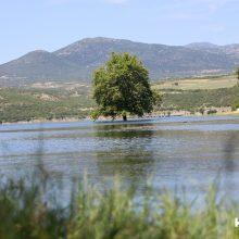 """Σημερινές (24/5) """"μαγικές"""" εικόνες, του kozan.gr, από το Πλατανόδασος του Ρυμνίου Κοζάνης (Βίντεο & Φωτογραφίες)"""