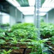 kozan.gr: Μεγάλη επένδυση για εγκατάσταση μονάδας καλλιέργειας και παραγωγής τελικών προϊόντων φαρμακευτικής κάνναβης στην περιοχή του Βαθυλάκκου του Δήμου Σερβίων
