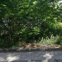 Αναφορά  αναγνώστη στο kozan.gr για χόρτα και θάμνους σε οικόπεδο επί της οδού στην οδό Πλάτωνος στην Κοζάνη