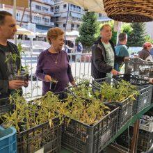 Δήμος Γρεβενών: Mε επιτυχία η εκδήλωση της δωρεάν διάθεσης Παραδοσιακών Σπόρων και Φυτών στην Κεντρική Πλατεία