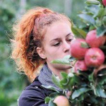 Μήλα και κεράσια κράτησαν τους νέους στα ορεινά χωριά των Πύργων και του Μεσόβουνου
