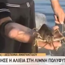 "kozan.gr: Το ψάρεμα της καραβίδας, στη λίμνη Πολυφύτου, όπως παρουσιάστηκε, σε ζωντανή σύνδεση στην εκπομπή της ΕΡΤ1 ""Μαζί το Σαββατοκύριακο"" (Βίντεο)"