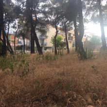 Σχόλιο αναγνώστη στο kozan.gr: Αυτή είναι η κατάσταση στο δασάκι του Αϊ-Σαράντη στην Κοζάνη (Φωτογραφίες)