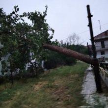 kozan.gr: Ολυμπιάδα Εορδαίας: Λόγω της κακοκαιρίας, έπεσε δέντρο, πάνω σε σπίτι  (Φωτογραφίες)